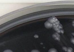 Molekularbiologische Schnell-Analytik