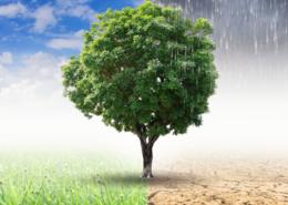 Grundwasserneubildung