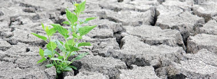 Anpassung an den Klimawandel