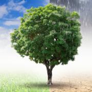 Klimawandel: Interview mit dem WDR